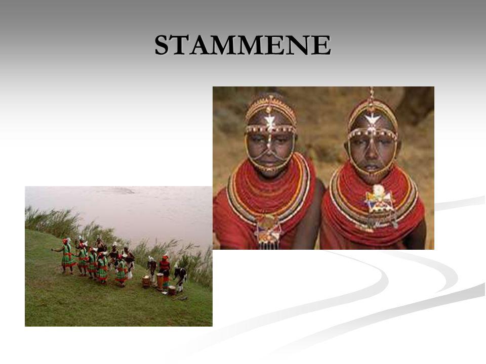 STAMMENE