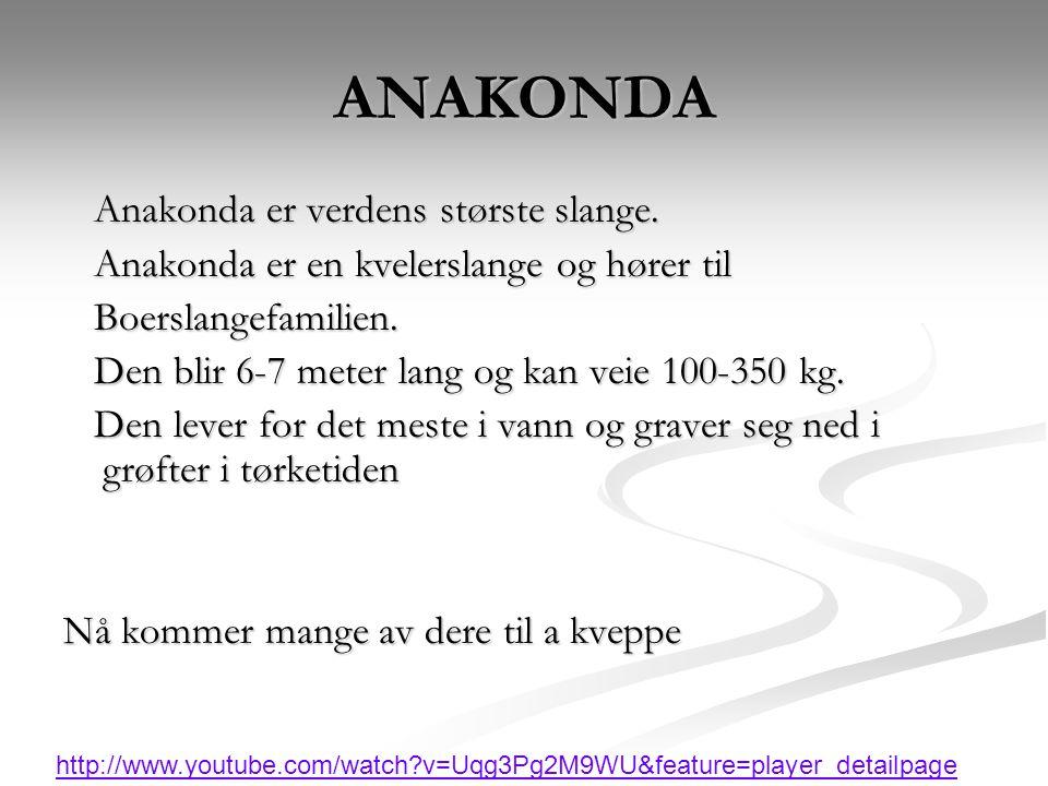 ANAKONDA Anakonda er verdens største slange. Anakonda er verdens største slange. Anakonda er en kvelerslange og hører til Anakonda er en kvelerslange