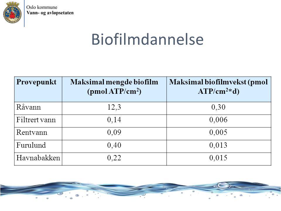 PrøvepunktMaksimal mengde biofilm (pmol ATP/cm 2 ) Maksimal biofilmvekst (pmol ATP/cm 2 *d) Råvann12,30,30 Filtrert vann0,140,006 Rentvann0,090,005 Furulund0,400,013 Havnabakken0,220,015 Biofilmdannelse