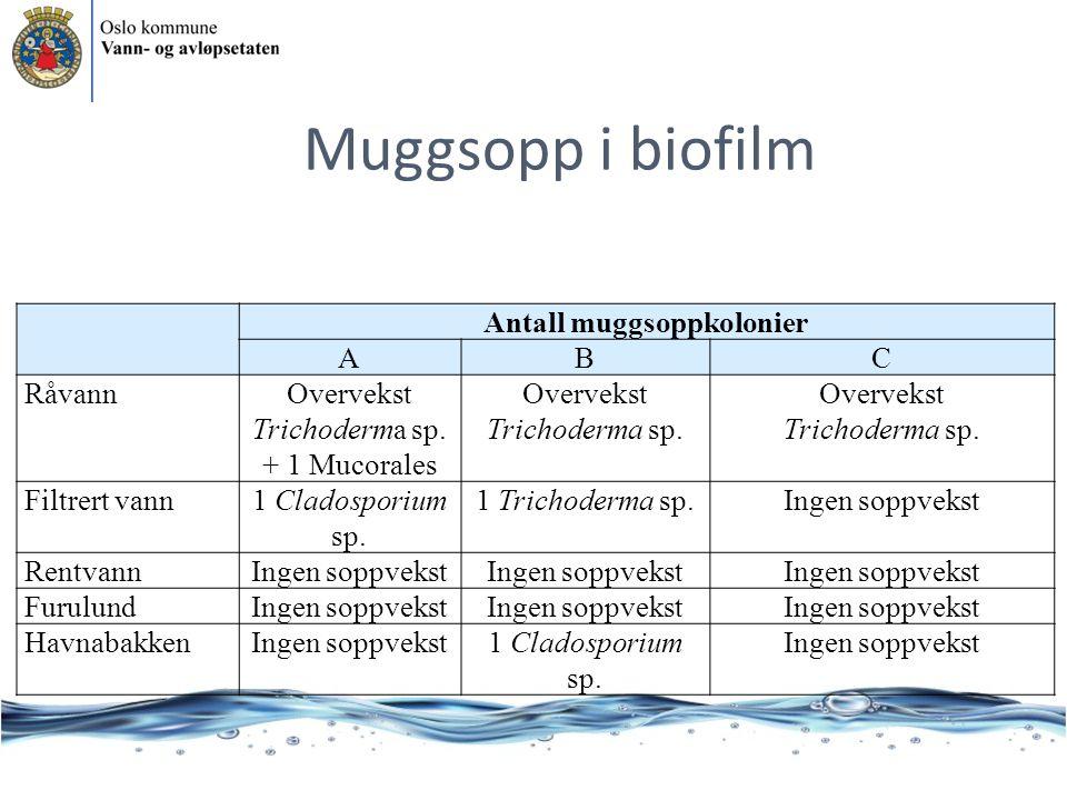 Antall muggsoppkolonier ABC RåvannOvervekst Trichoderma sp. + 1 Mucorales Overvekst Trichoderma sp. Filtrert vann1 Cladosporium sp. 1 Trichoderma sp.I