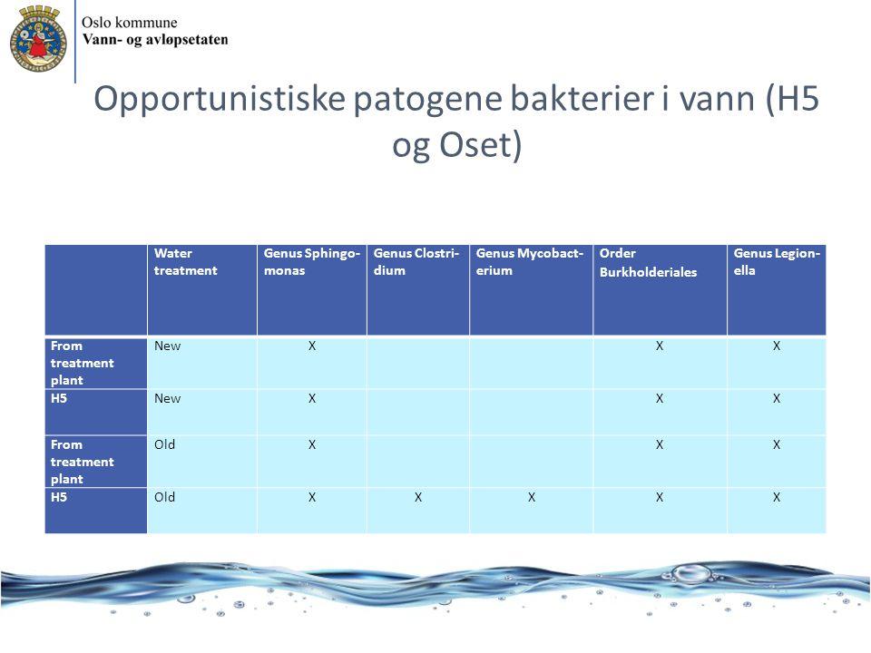 Opportunistiske patogene bakterier i vann (H5 og Oset) Water treatment Genus Sphingo- monas Genus Clostri- dium Genus Mycobact- erium Order Burkholder
