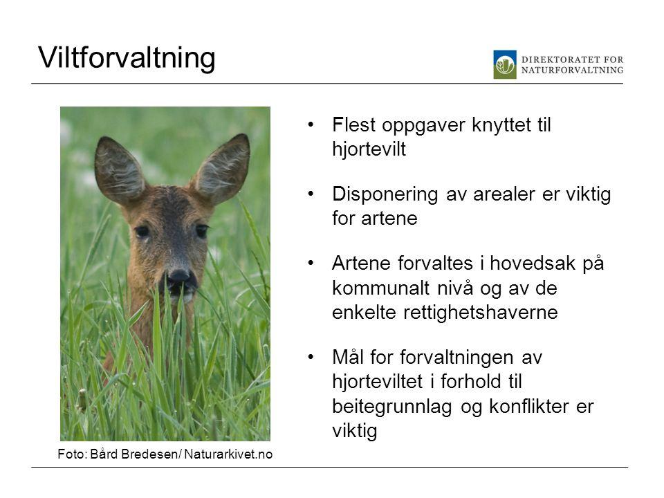 Viltforvaltning •Flest oppgaver knyttet til hjortevilt •Disponering av arealer er viktig for artene •Artene forvaltes i hovedsak på kommunalt nivå og