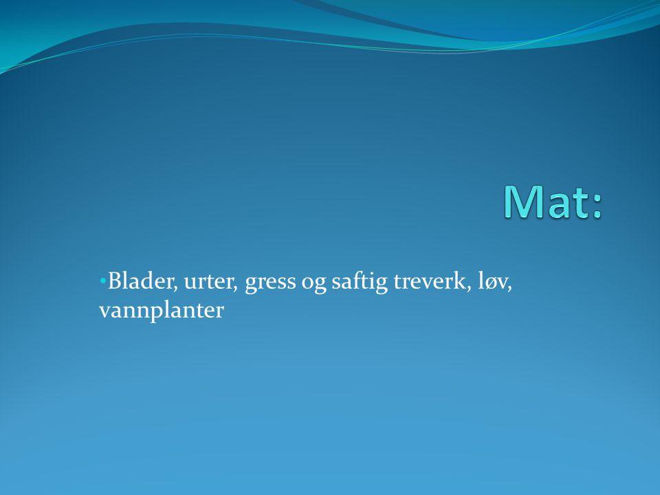 • Blader, urter, gress og saftig treverk, løv, vannplanter