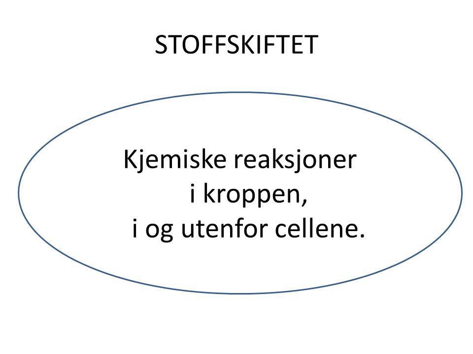 STOFFSKIFTET Kjemiske reaksjoner i kroppen, i og utenfor cellene.