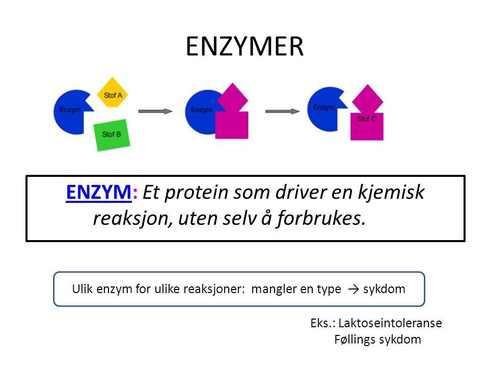 ENZYMER ENZYMENZYM: Et protein som driver en kjemisk reaksjon, uten selv å forbrukes. Ulik enzym for ulike reaksjoner: mangler en type → sykdom Eks.:
