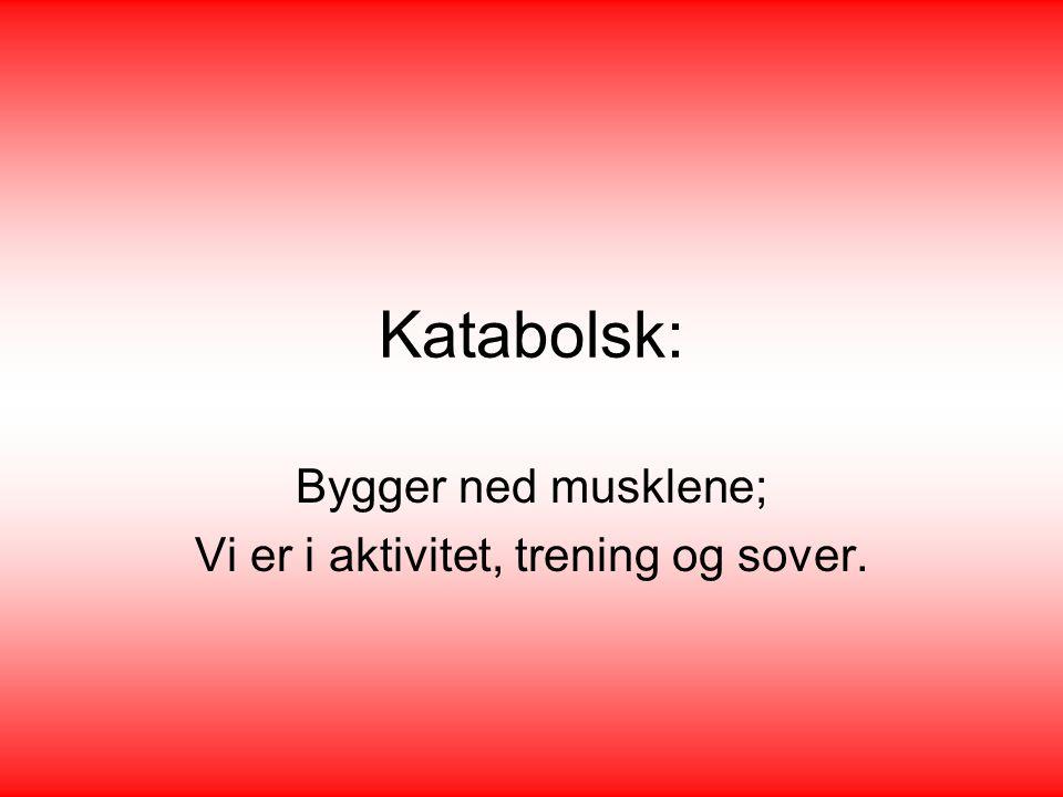 Katabolsk: Bygger ned musklene; Vi er i aktivitet, trening og sover.