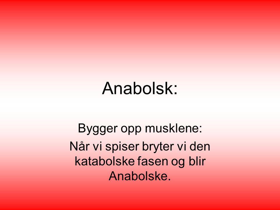 Anabolsk: Bygger opp musklene: Når vi spiser bryter vi den katabolske fasen og blir Anabolske.