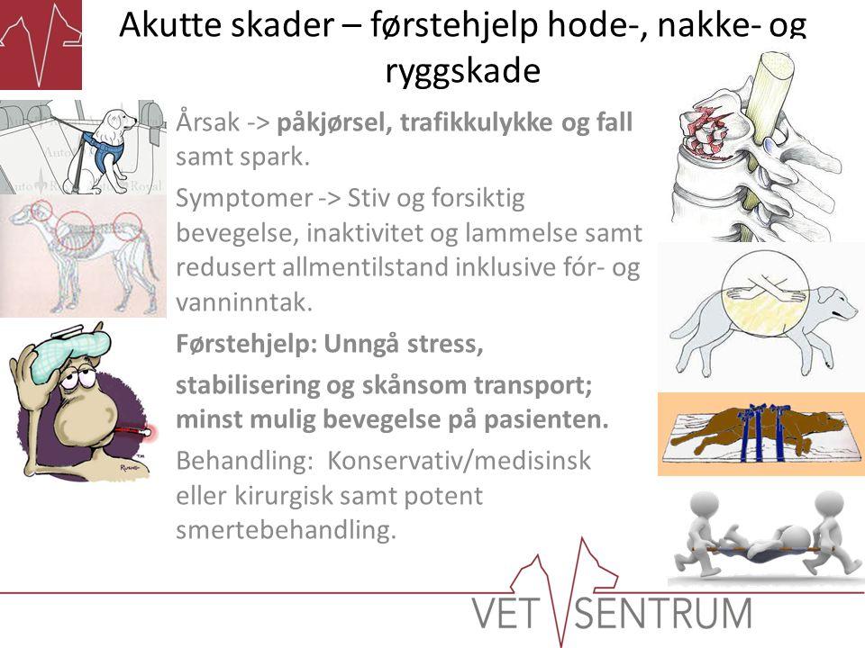 Akutte skader – førstehjelp hode-, nakke- og ryggskade Årsak -> påkjørsel, trafikkulykke og fall samt spark. Symptomer -> Stiv og forsiktig bevegelse,