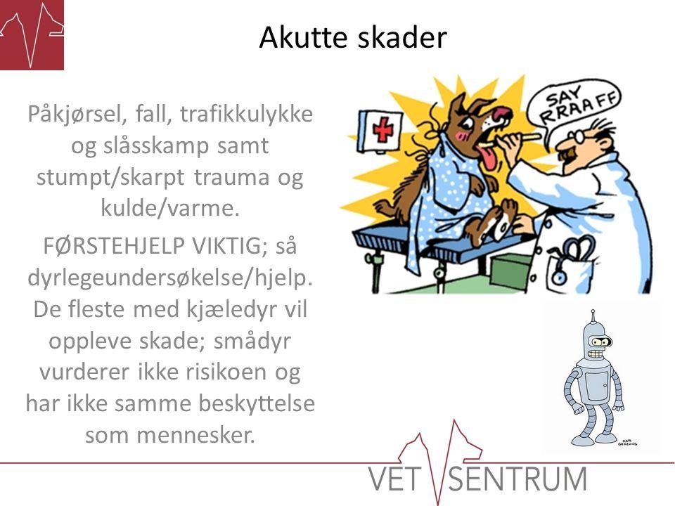 Akutte skader Påkjørsel, fall, trafikkulykke og slåsskamp samt stumpt/skarpt trauma og kulde/varme. FØRSTEHJELP VIKTIG; så dyrlegeundersøkelse/hjelp.