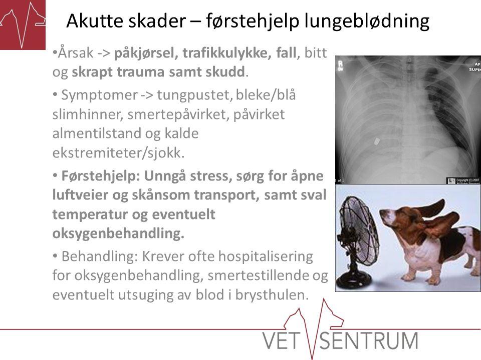Akutte skader – førstehjelp forfrysning og nedkjøling • Årsak -> Kulde og alvorlig sykdom/skade samt drukning.