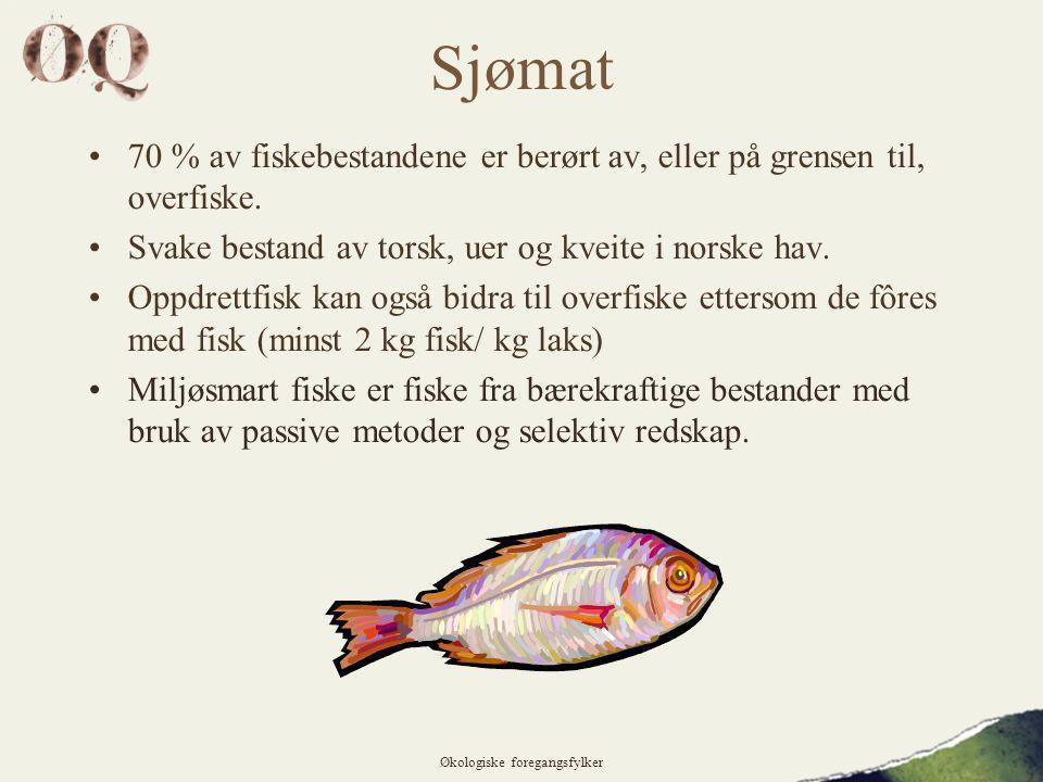 Sjømat •70 % av fiskebestandene er berørt av, eller på grensen til, overfiske.