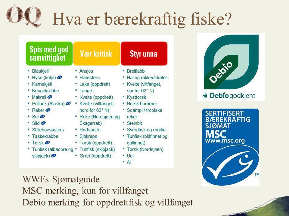 Hva er bærekraftig fiske.