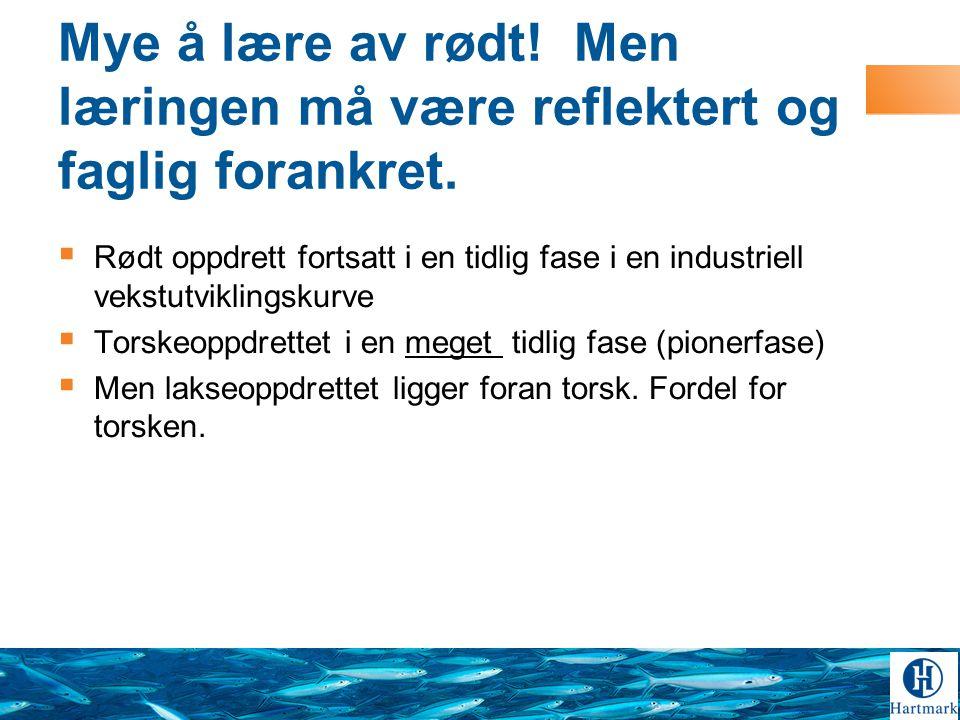 Norsk Torsk Tusen Takk!