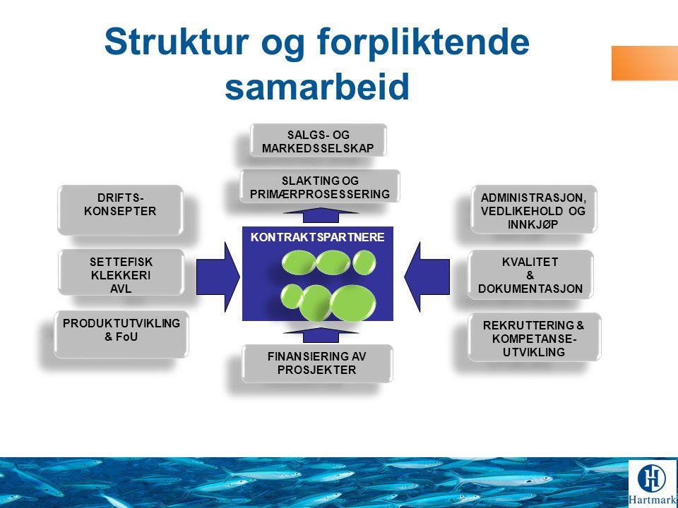 Struktur og forpliktende samarbeid SETTEFISK KLEKKERI AVL SETTEFISK KLEKKERI AVL KONTRAKTSPARTNERE SLAKTING OG PRIMÆRPROSESSERING ADMINISTRASJON, VEDLIKEHOLD OG INNKJØP KVALITET & DOKUMENTASJON KVALITET & DOKUMENTASJON PRODUKTUTVIKLING & FoU DRIFTS- KONSEPTER FINANSIERING AV PROSJEKTER FINANSIERING AV PROSJEKTER REKRUTTERING & KOMPETANSE- UTVIKLING SALGS- OG MARKEDSSELSKAP