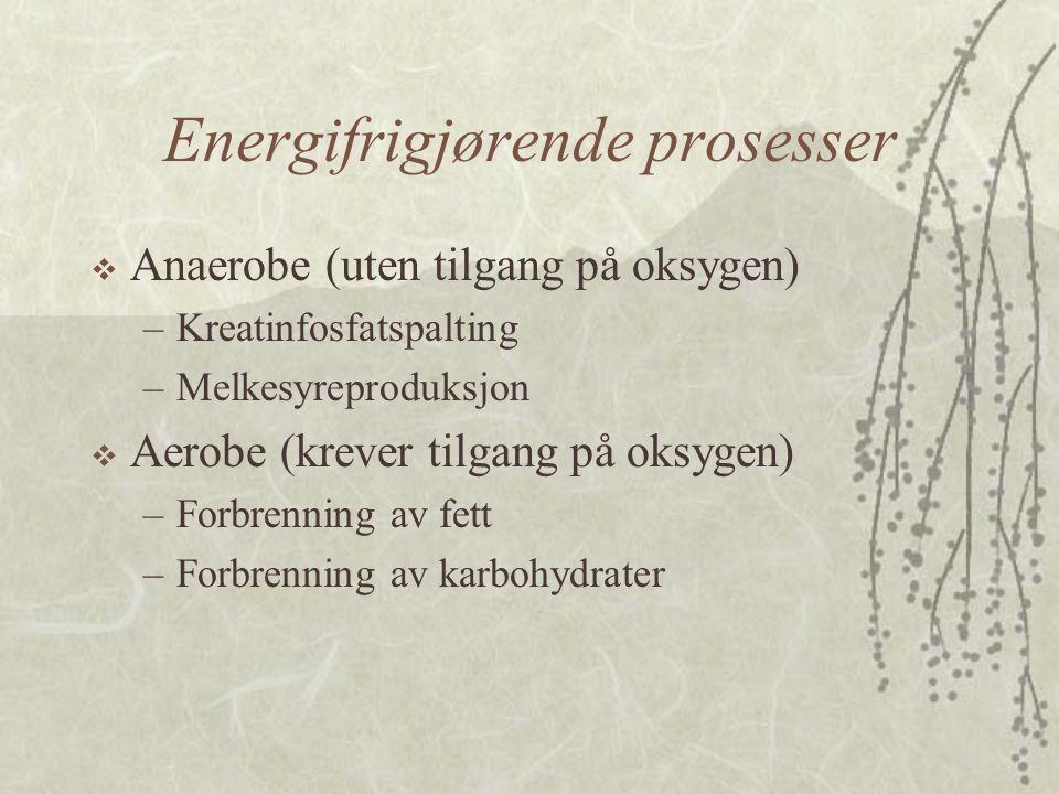 Energifrigjørende prosesser  Anaerobe (uten tilgang på oksygen) –Kreatinfosfatspalting –Melkesyreproduksjon  Aerobe (krever tilgang på oksygen) –For