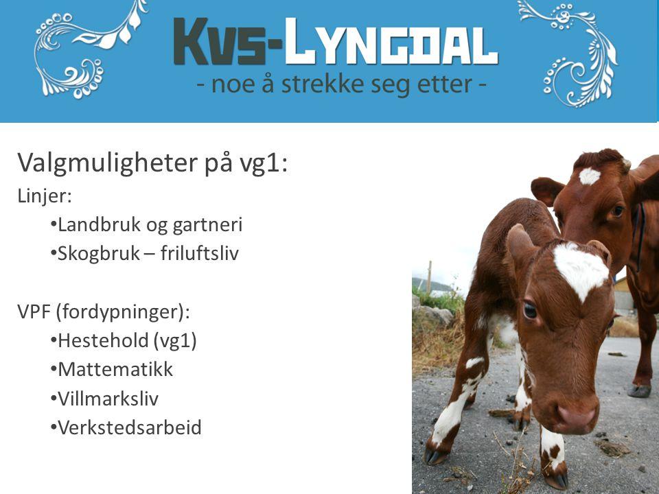www.kvs.no Vg1 Naturbruk Vg2 Landbruk og gartneri Vg3 Landbruk og husdyrhold Vg3 Naturforvaltn.