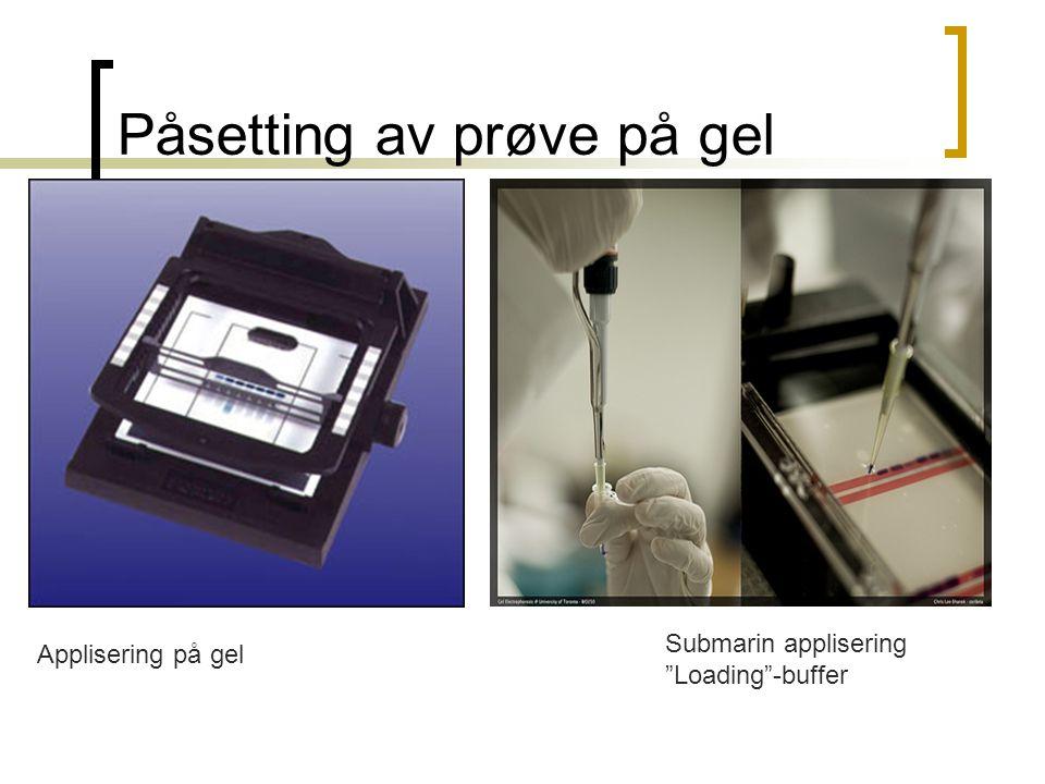 """Påsetting av prøve på gel Applisering på gel Submarin applisering """"Loading""""-buffer"""
