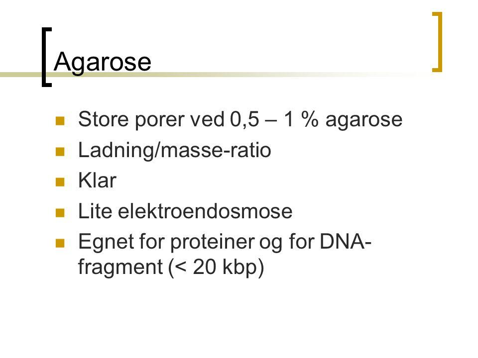 Agarose  Store porer ved 0,5 – 1 % agarose  Ladning/masse-ratio  Klar  Lite elektroendosmose  Egnet for proteiner og for DNA- fragment (< 20 kbp)