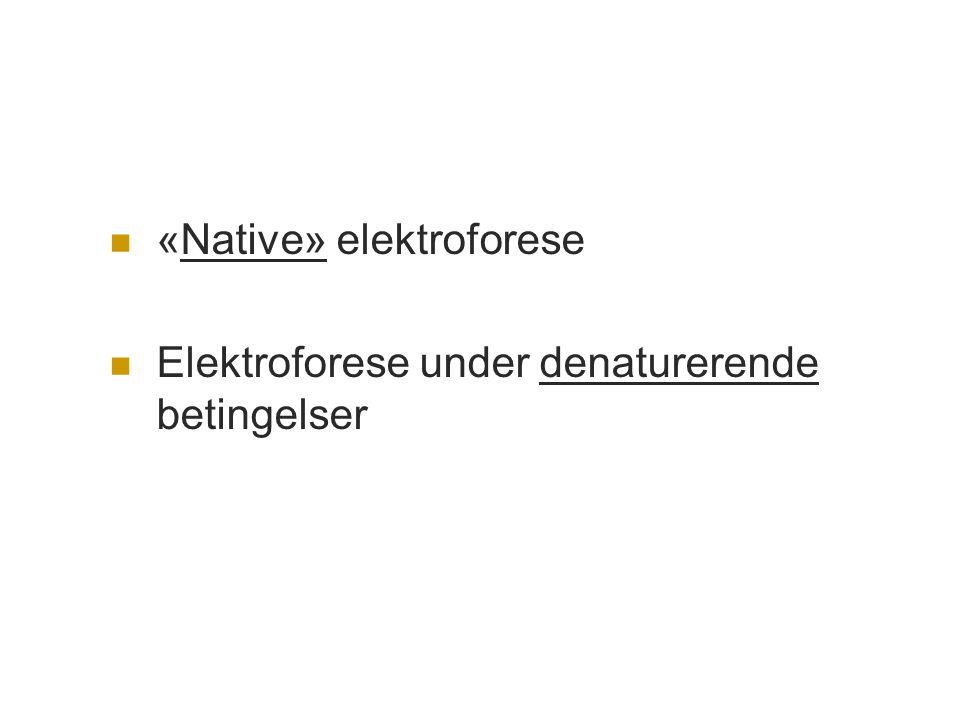  «Native» elektroforese  Elektroforese under denaturerende betingelser