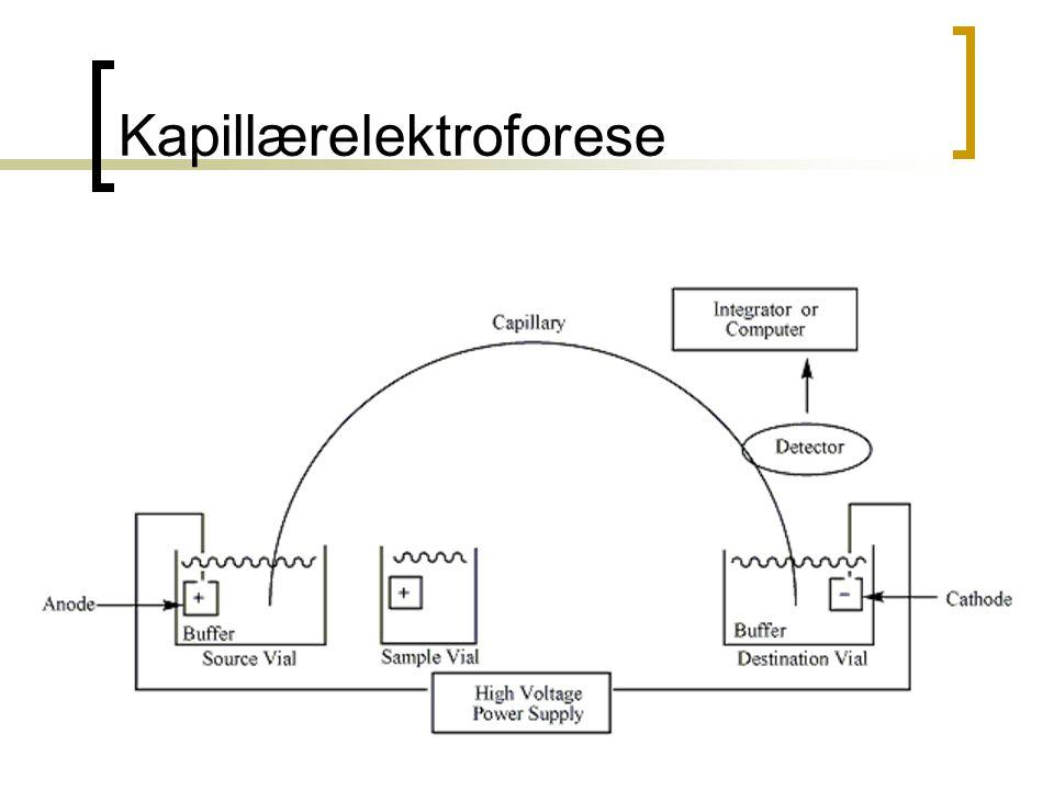 Kapillærelektroforese
