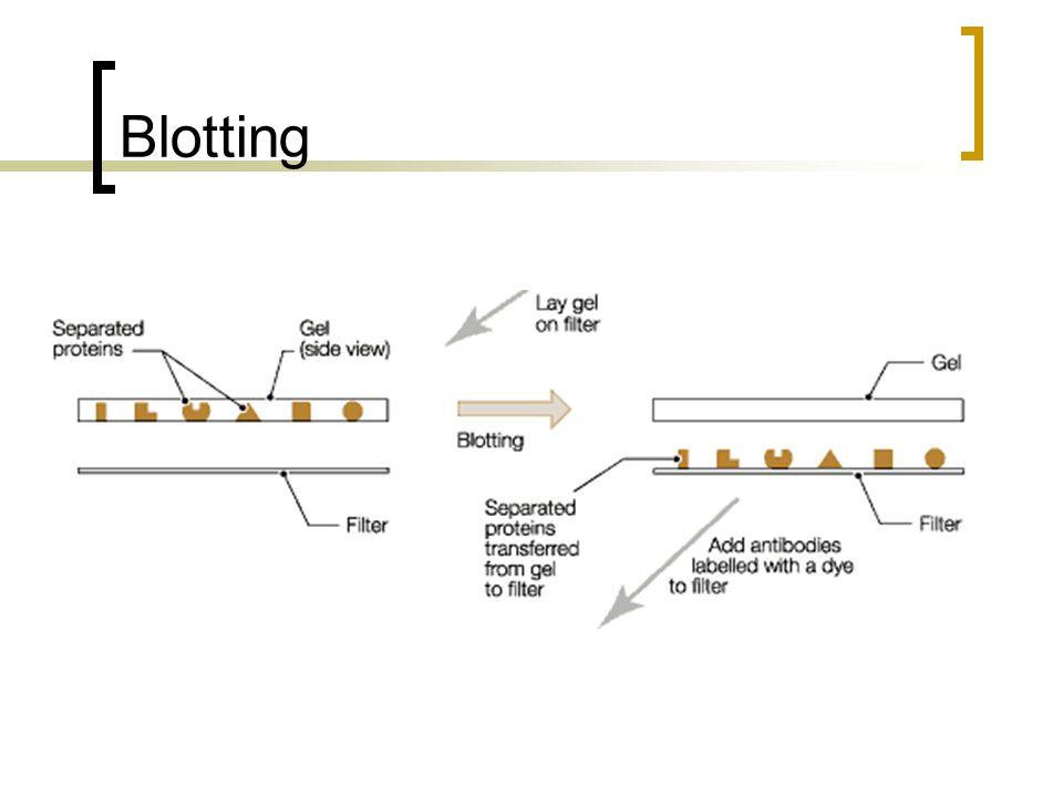 Blotting