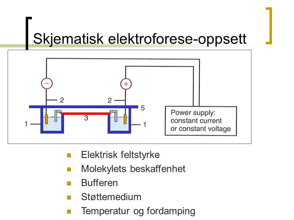 Skjematisk elektroforese-oppsett  Elektrisk feltstyrke  Molekylets beskaffenhet  Bufferen  Støttemedium  Temperatur og fordamping