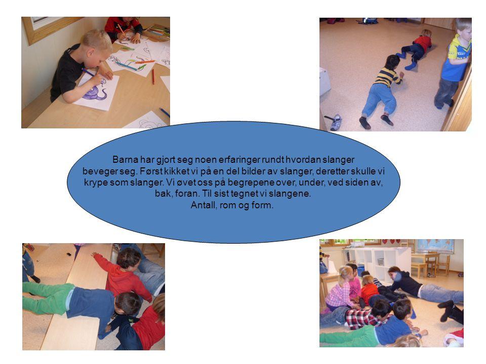 Barna har gjort seg noen erfaringer rundt hvordan slanger beveger seg. Først kikket vi på en del bilder av slanger, deretter skulle vi krype som slang