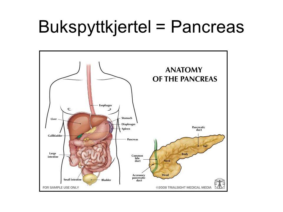 Makrovaskulær sykdom - Åreforkalkning Aterosklerose: Frå gresk der athere betyr graut /grøt og skleros hard, dvs hard graut i arterieveggen