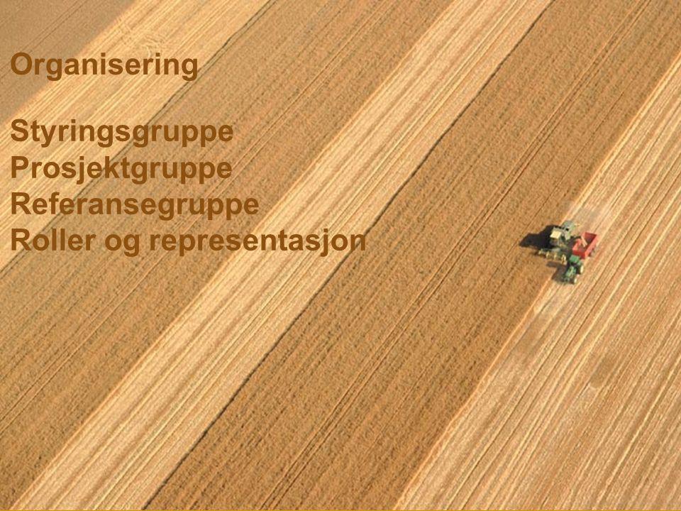 Organisering Styringsgruppe Prosjektgruppe Referansegruppe Roller og representasjon