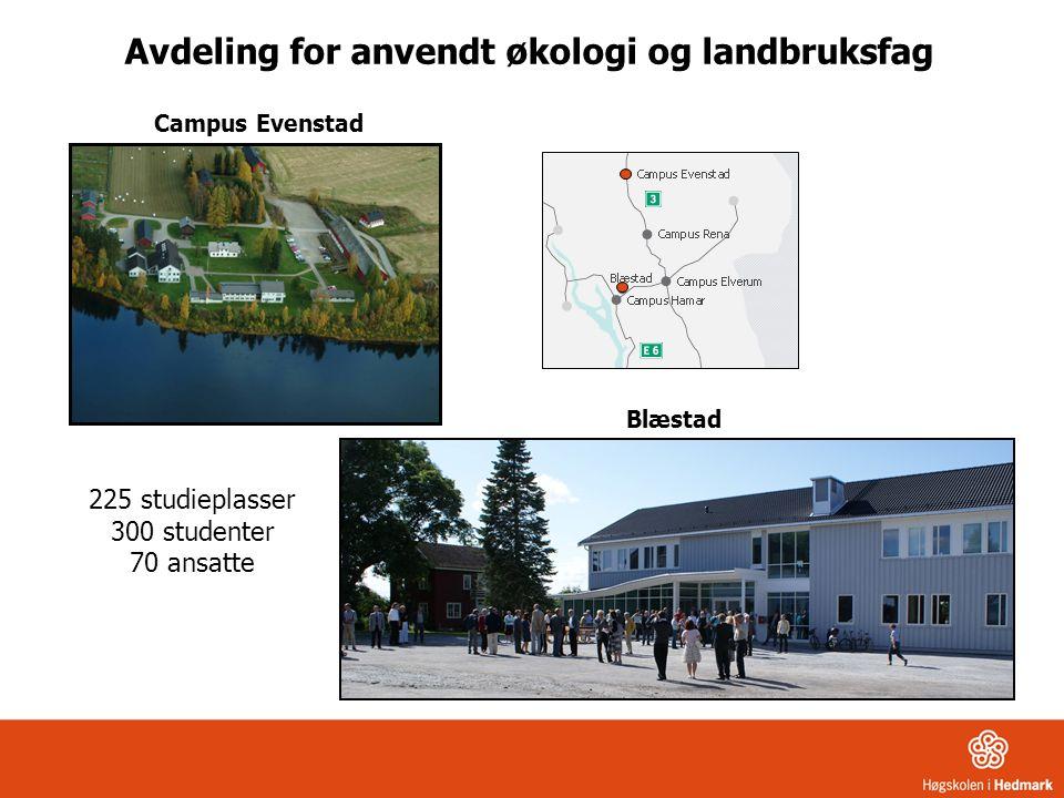 Campus Evenstad Blæstad 225 studieplasser 300 studenter 70 ansatte Avdeling for anvendt økologi og landbruksfag