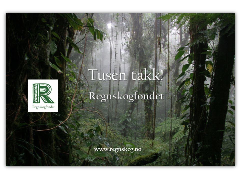 www.regnskog.no Tusen takk!