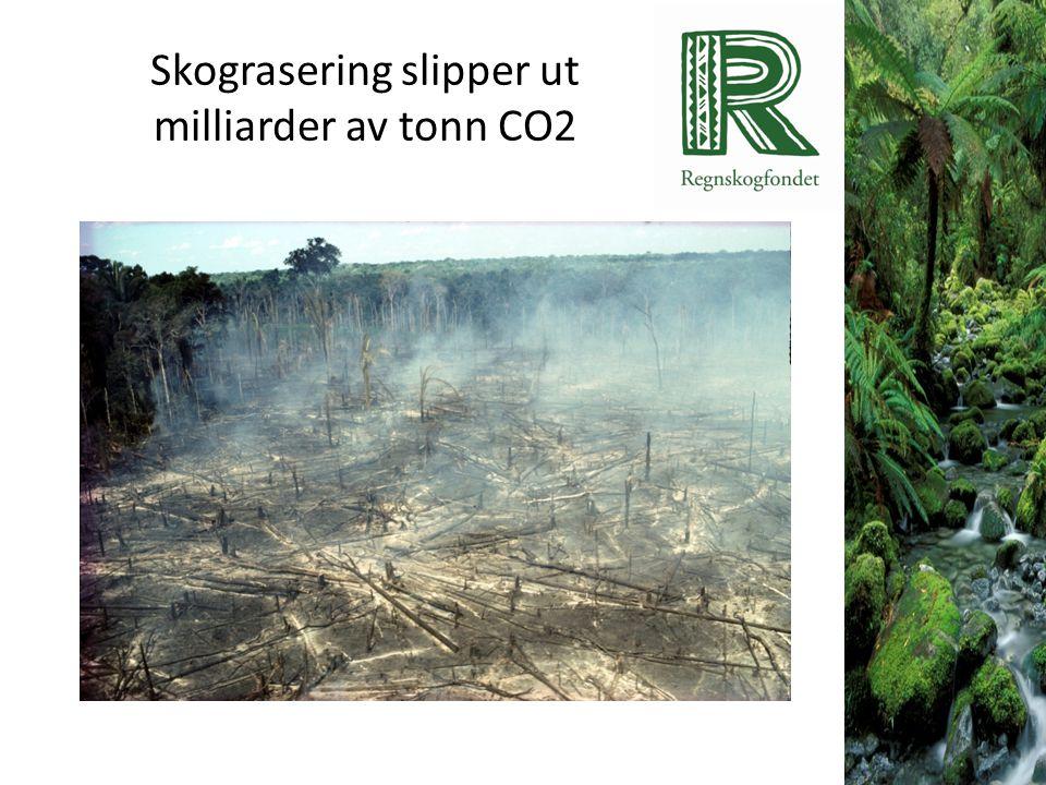 Skograsering slipper ut milliarder av tonn CO2