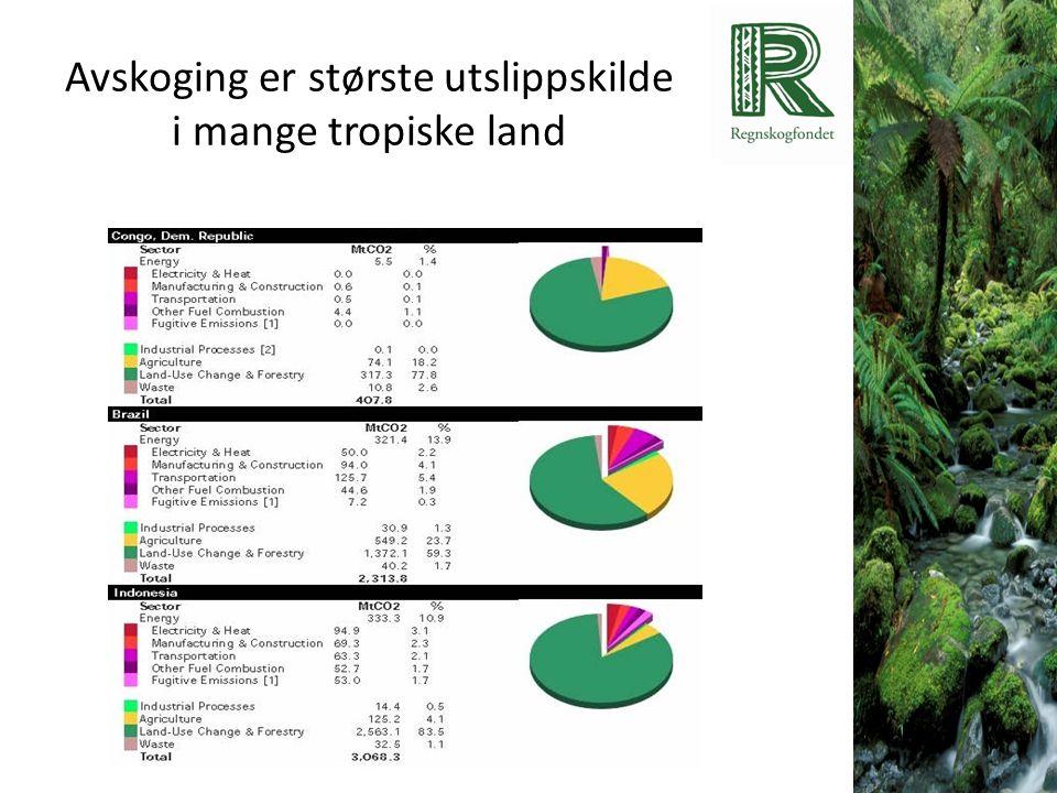 Avskoging er største utslippskilde i mange tropiske land