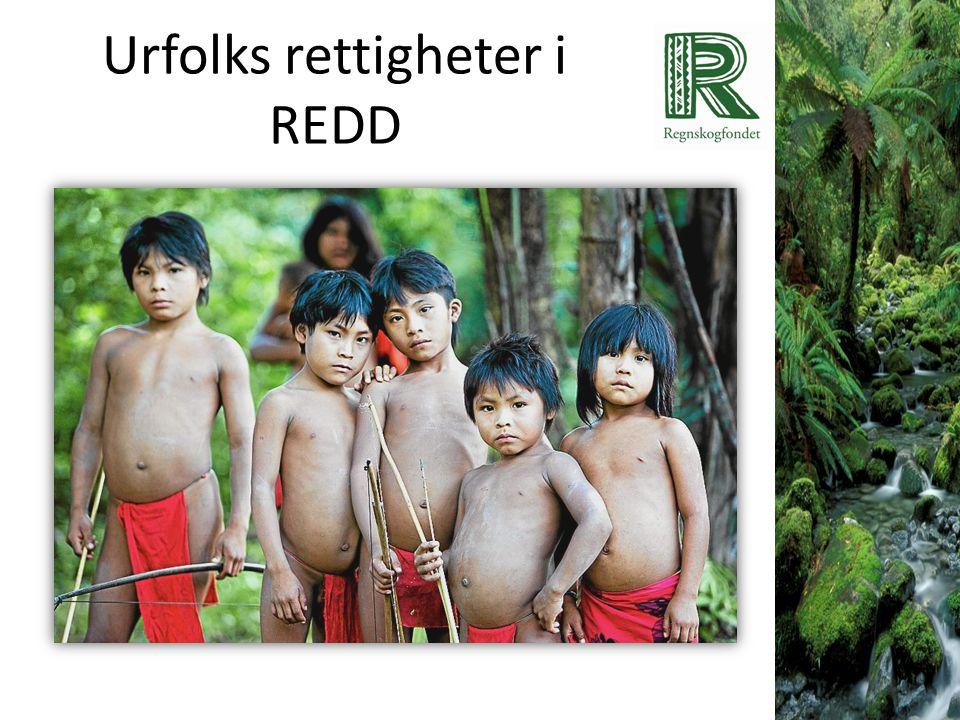 Sikre rettigheter = garanti mot avskoging