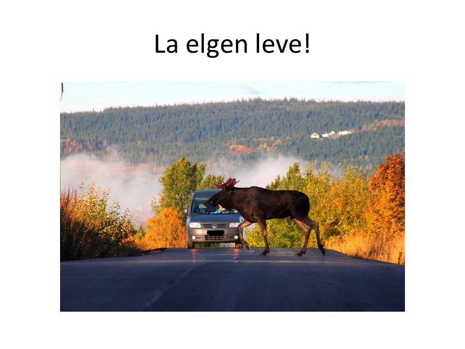 La elgen leve!