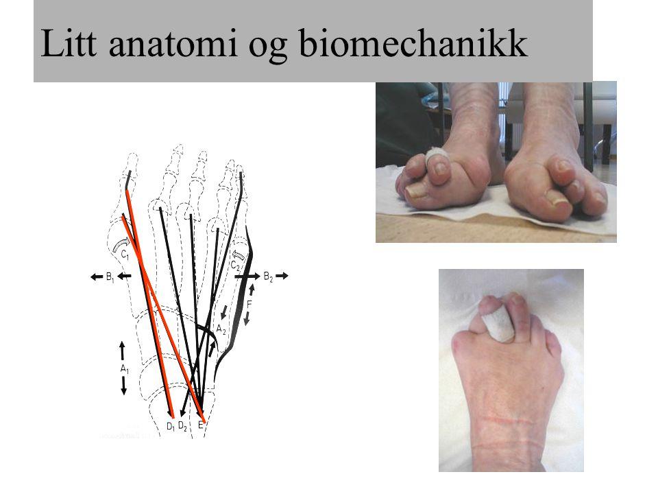 Litt anatomi og biomechanikk