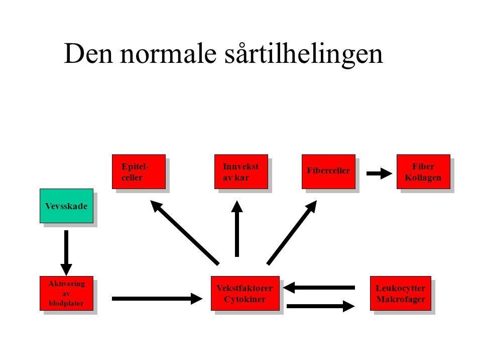 Den normale sårtilhelingen Vevsskade Vekstfaktorer Cytokiner Vekstfaktorer Cytokiner Leukocytter Makrofager Leukocytter Makrofager Fiber Kollagen Fibe