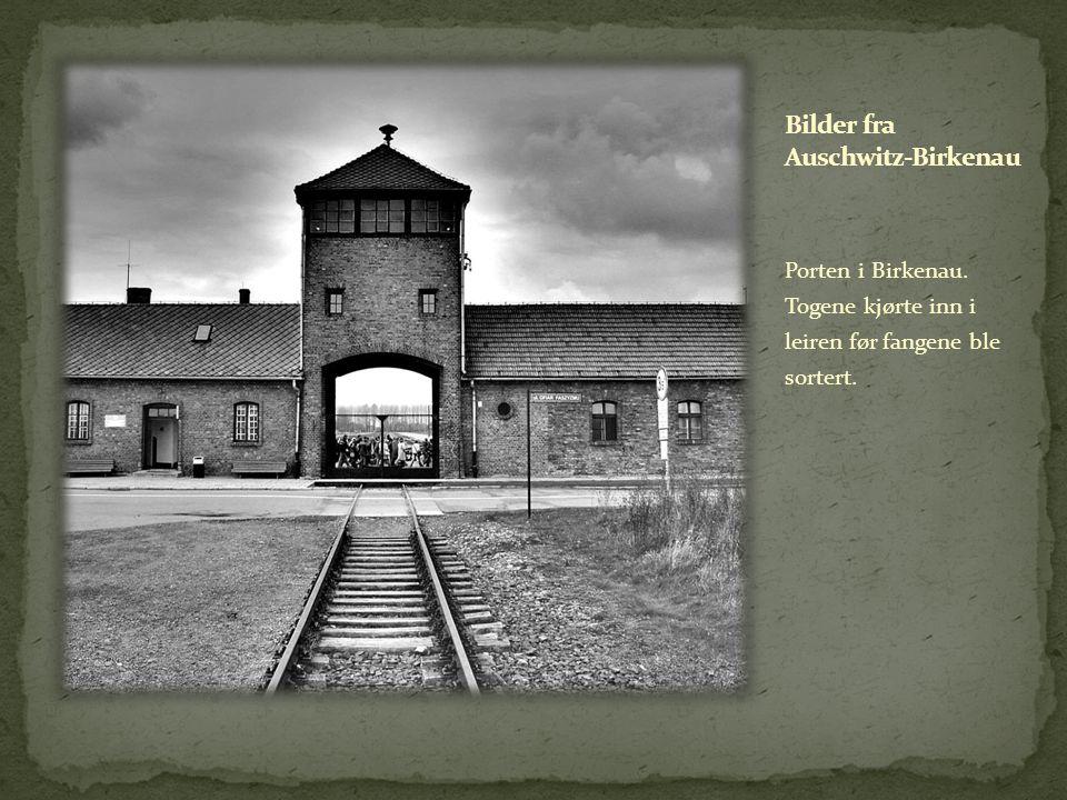 Porten i Birkenau. Togene kjørte inn i leiren før fangene ble sortert.