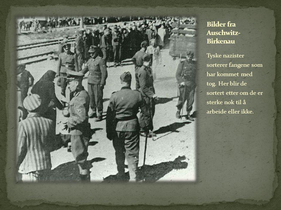Tyske nazister sorterer fangene som har kommet med tog.
