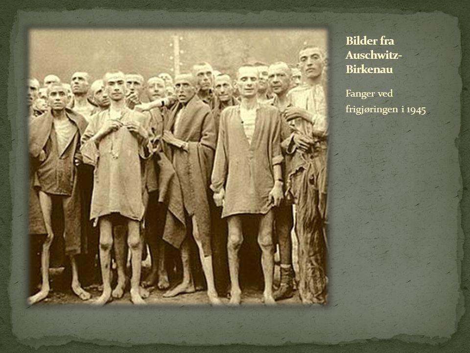 Fanger ved frigjøringen i 1945