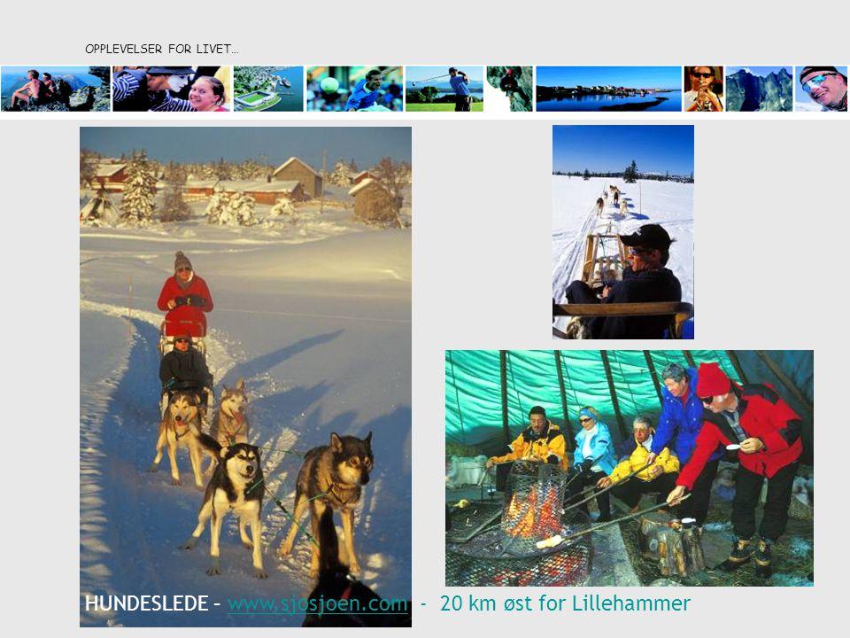 OPPLEVELSER FOR LIVET… HUNDESLEDE – www.sjosjoen.com - 20 km øst for Lillehammerwww.sjosjoen.com