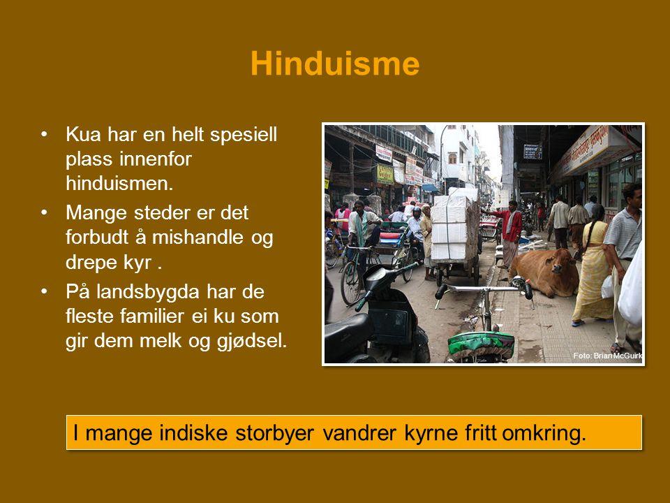 Hinduisme •Kua har en helt spesiell plass innenfor hinduismen. •Mange steder er det forbudt å mishandle og drepe kyr. •På landsbygda har de fleste fam
