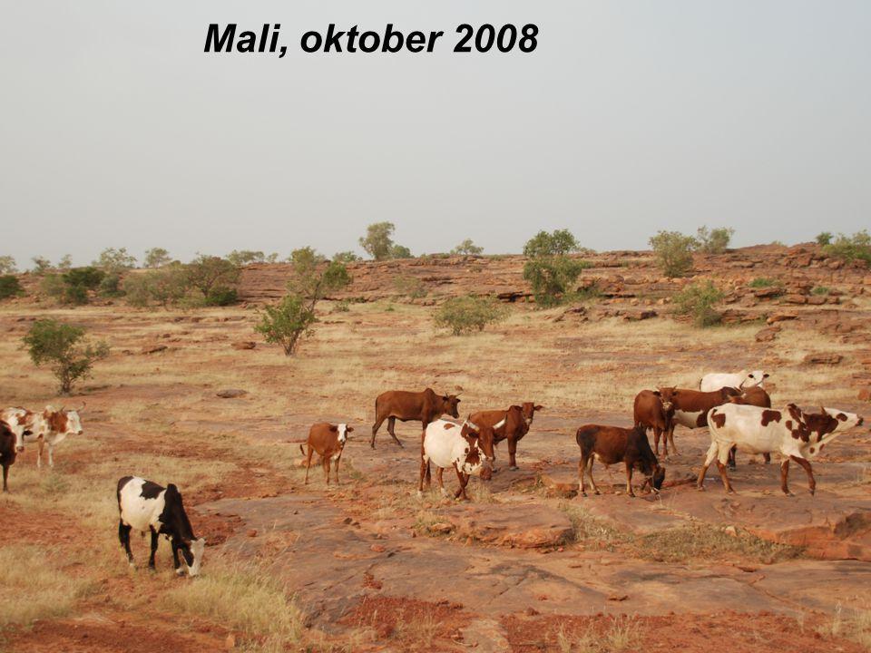 Mali, oktober 2008