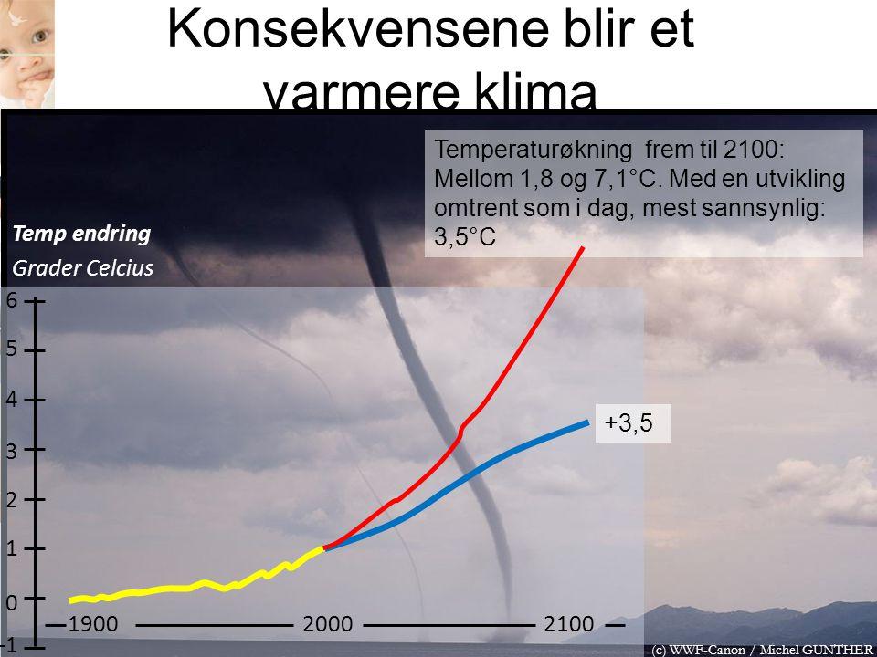 Konsekvensene blir et varmere klima (c) WWF-Canon / Michel GUNTHER 6 5 4 3 2 1 0 190020002100 Temp endring Grader Celcius Temperaturøkning frem til 21