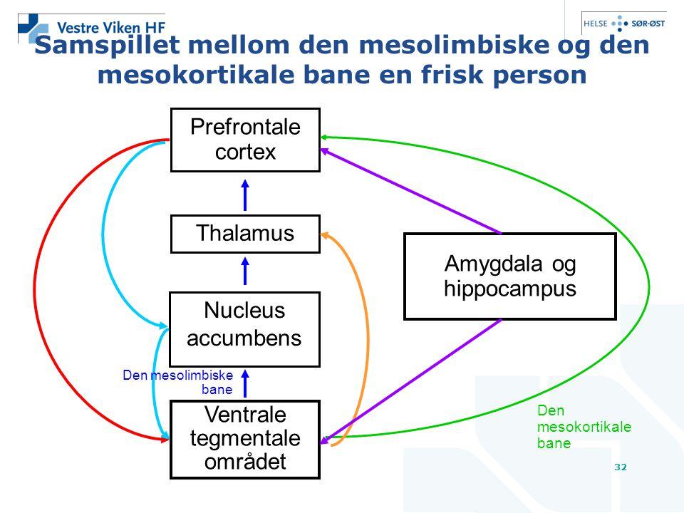32 Samspillet mellom den mesolimbiske og den mesokortikale bane en frisk person Prefrontale cortex Thalamus Nucleus accumbens Ventrale tegmentale området Amygdala og hippocampus Den mesokortikale bane Den mesolimbiske bane