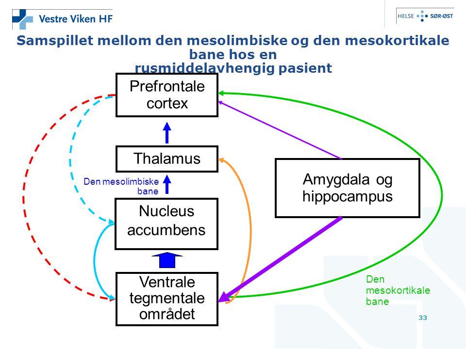 33 Samspillet mellom den mesolimbiske og den mesokortikale bane hos en rusmiddelavhengig pasient Prefrontale cortex Thalamus Nucleus accumbens Ventrale tegmentale området Amygdala og hippocampus Den mesokortikale bane Den mesolimbiske bane