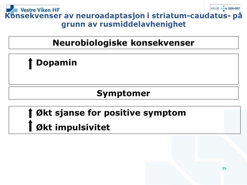 35 Konsekvenser av neuroadaptasjon i striatum-caudatus- på grunn av rusmiddelavhenighet Dopamin Symptomer Økt sjanse for positive symptom Økt impulsivitet Neurobiologiske konsekvenser