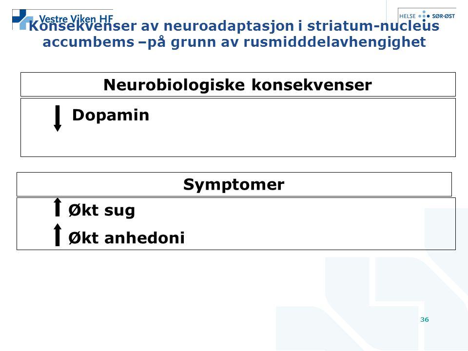 36 Konsekvenser av neuroadaptasjon i striatum-nucleus accumbems –på grunn av rusmidddelavhengighet Dopamin Symptomer Økt sug Økt anhedoni Neurobiologiske konsekvenser