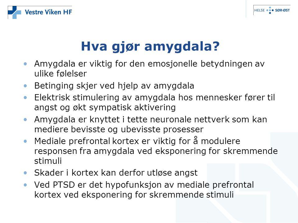 Hva gjør amygdala.