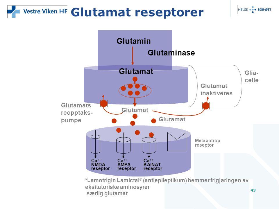 43 Glutamat reseptorer Glutamat Glutamin Glutaminase Glutamats reopptaks- pumpe Glutamat Ca ++ Ca ++ Ca ++ NMDAAMPAKAINAT reseptorreseptorreseptor Metabotrop reseptor Glutamat inaktiveres Glia- celle *Lamotrigin Lamictal ® (antiepileptikum) hemmer frigjøringen av eksitatoriske aminosyrer særlig glutamat
